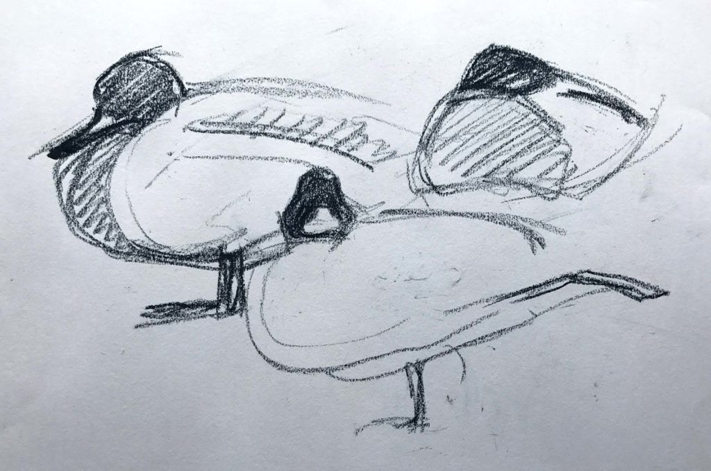 duck sketches 1 lockwood